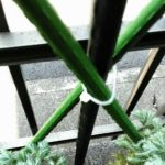 園芸支柱の画像