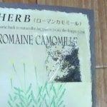 ローマンカモミールの種の画像