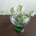 グラスと花の画像