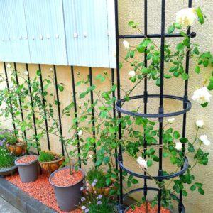 バラの庭の画像