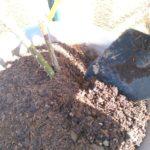 バラと堆肥の画像