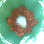 植木鉢の内部の画像