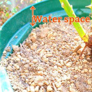 植木鉢のウォータースペースの画像