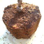 バラの根鉢の画像