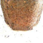 根鉢の画像