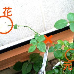 花茎の画像